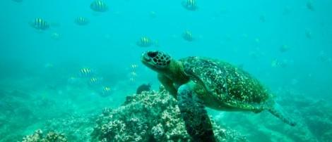 Galapagos-127-580x250
